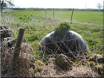 SK2076 : Rural grow-bag by Peter Barr