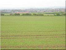 TA1181 : Filey Field by JThomas