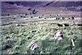 NF1099 : St Kilda - houses on Village Street, and sheep, 1967 by M J Richardson