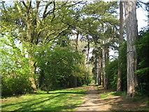 TQ1293 : Carpenders Park Lawn Cemetery: Woodland Walk by Nigel Cox