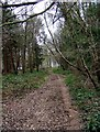SO7379 : Path in the Wyre Forest, near Buttonbridge by P L Chadwick