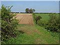 SE9636 : Looking towards Ella Hill by Andy Beecroft