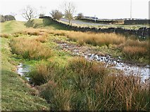 NY9569 : The north defensive ditch of Hadrian's Wall east of Greenfield Farm by Mike Quinn