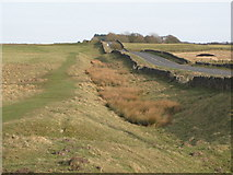 NY9569 : The north defensive ditch of Hadrian's Wall west of Milecastle 24 by Mike Quinn