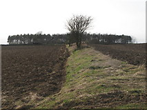 NY9569 : The line of the Vallum east of Greenfield Farm by Mike Quinn