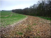 SU8413 : Northern edge of Whitedown Plantation by Chris Gunns