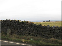 NY9569 : Drystone wall and pastures west of Milecastle 24 by Mike Quinn