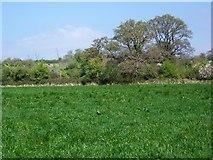 ST8351 : Footpath near Lower Rudge by Maigheach-gheal