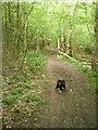 SJ6509 : Footpath in Limekiln Wood by Richard Law