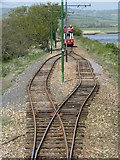 SY2591 : Passing loop on the Seaton tramway by Sarah Charlesworth