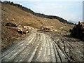NS2499 : Log Piles in Ardgartan Forest by Iain Thompson