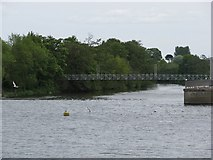 SX9291 : The River Exe flows over Trew's Weir by Sarah Charlesworth