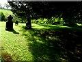 ST5906 : Churchyard, St Edwold's Stockwood by Nigel Mykura