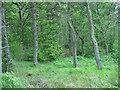 NS7661 : Blacklands Plantation by Jim Smillie