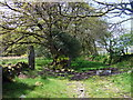 SN0937 : Woodland megalith in Coed Ty-canol by ceridwen