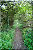 SU5646 : Footpath from North Waltham to the A30 by Peter Facey