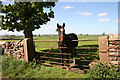 NY6325 : Horse in gateway by Helen Wilkinson