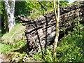 SJ9690 : Fallen Tree by Gerald England