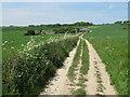 TQ9351 : North Downs Way to Cobham Farm by David Anstiss