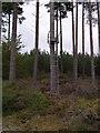 NJ1267 : Burgh Head Forest - Deer Seat by John MacDonald