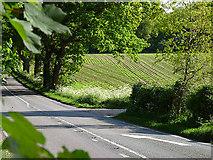 TM4477 : Roadside scene at Braker Hill by Zorba the Geek