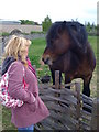 NZ3365 : Talking to a horse at Bede's World by Darrin Antrobus