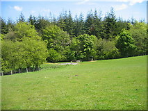 NZ1136 : Field near Old Park by Les Hull