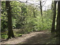 NZ2479 : Plessey Woods Country Park by Anthony Foster