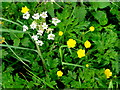SO4818 : Cow Parsley and Buttercup by Jonathan Billinger