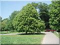 TQ3006 : Trees in Preston Park by Paul Gillett