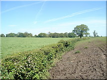 SJ5934 : Copse south of Willaston by Brownfox