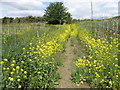 TL0899 : Nene Way near Wansford by Michael Trolove