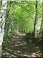 NN9460 : Ben Vrackie path by Richard Webb