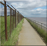 TA0626 : Perspective on the Trans Pennine Trail by David Wright