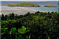 C0635 : Ards Forest Park - Clonmass Bay from forest track by Joseph Mischyshyn