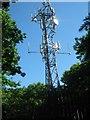 TQ4963 : Phone Mast in West Wood by David Anstiss