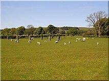 NU0012 : Parkland at Prendwick by Oliver Dixon