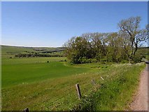NU0112 : Field and copse near Prendwick by Oliver Dixon