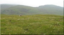 NN2868 : Bog north of Abhainn Rath by Richard Webb