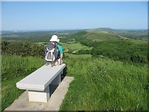 SY9282 : Seat on Creech Barrow by John Palmer
