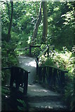 SZ5881 : Shanklin Chine - Path by Peter Trimming