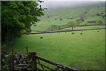 NY1807 : Sheep grazing in Wasdale by N Chadwick