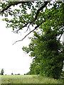 TF9802 : Oak trees growing alongside Woodrising Road by Evelyn Simak