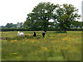 TF9702 : Horses in rough grazing near Woodrising by Andy F