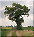 TF9702 : A solitary oak near Woodrising by Andy F