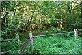 TQ5951 : Track through the woods, Dene Park by N Chadwick