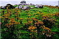 G6633 : Carrowmore Megalithic Cemetery by Joseph Mischyshyn