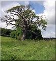 SN0107 : Old tree at Garron Pill by John Duckfield