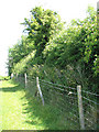 TM1996 : Tasburgh's ancient earthworks enclosure - medieval hedge by Evelyn Simak
