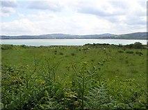 C4449 : Figart Point, Doagh Island by Kenneth  Allen